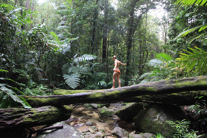 Cairns to Cape Tribulation