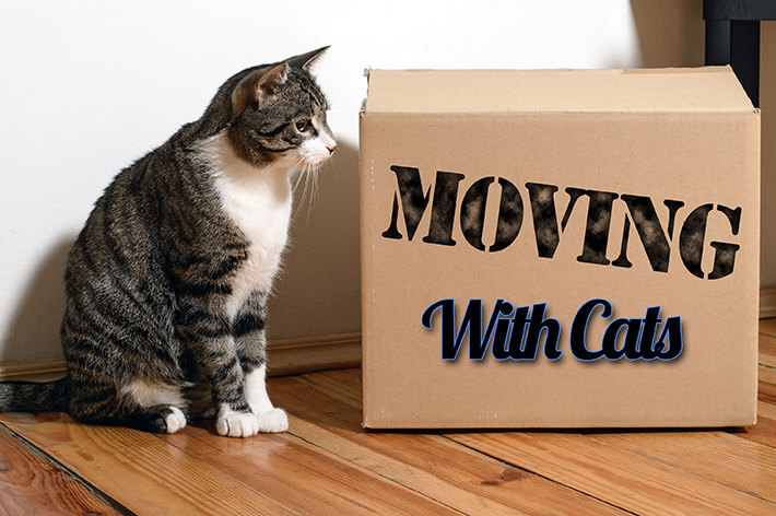 Moving House With Cats