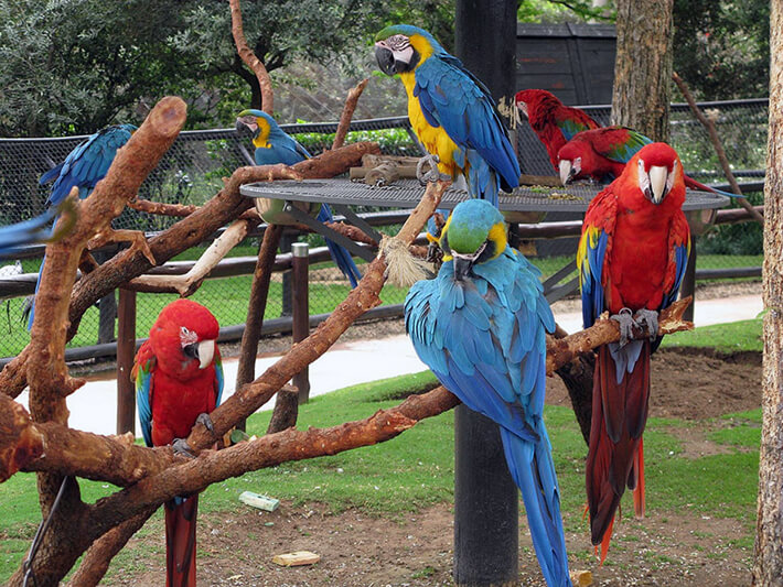 Bird Garden, Naples - Florida
