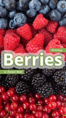Growing Berries In Raised Beds