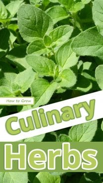 How to Grow Culinary Herbs