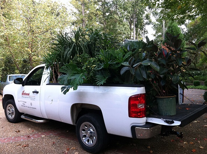 How to Move Plants