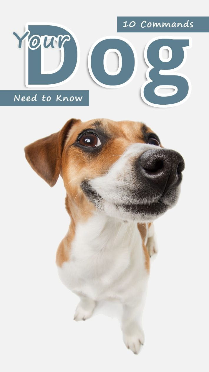 10 Commands Your Dogs Need to Know