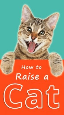 How to Raise a Cat